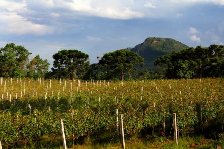 Vista da Serra inclui na mesma paisagem os vinhedos e parreirais.