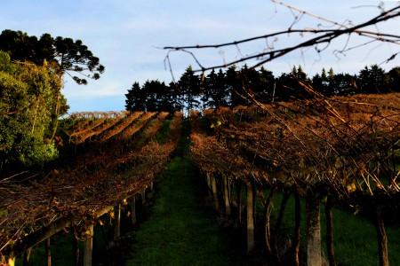 Os lindos vinhedos da Quinta Don Bonifácio, que será tema de um post em breve! (foto: Gabriela Di Bella)