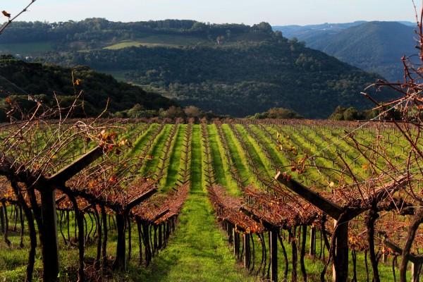 Paisagem em Caxias - vinhas da Quinta Don Bonifácio