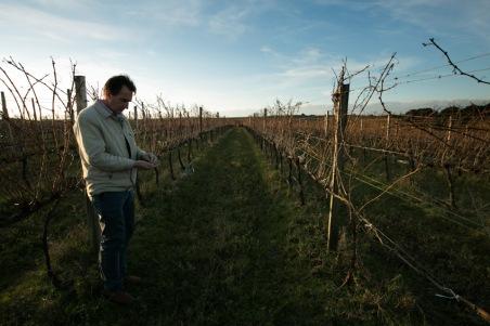 Coxilhas e vinhedos: a colheita é manual, mas o posicionamento das videiras permite a mecanização. (foto: Gabriela Di Bella)