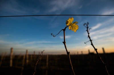 O descampado dos Pampas deixa solitárias as vinhas. (foto: Gabriela DI Bella)