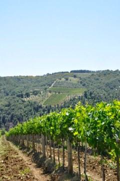 Vinhedos de Montalcino unem história e beleza.